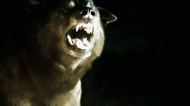 File:Shaggydog 1x10.jpg