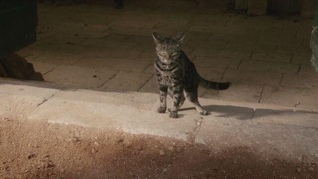 File:Cat Arya is chasing Episode 105.jpg