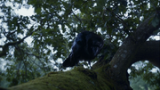 Three-eyed raven on a tree.png