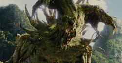 Kol's tree form