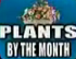 Plants By The Month