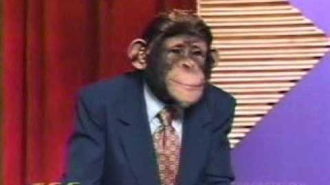 """The Chimp Channel """"Wheel of Fortune"""""""