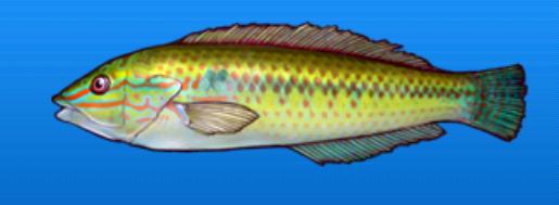 File:Rainbowfish.png