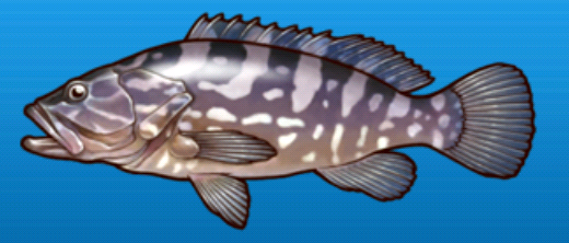 File:Longtooth grouper.png
