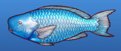 File:Blue parrotfish.png
