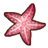 File:Small starfish.png