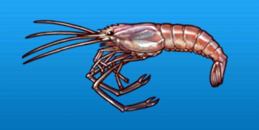 File:River prawn.png