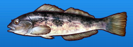 File:Greenling.png