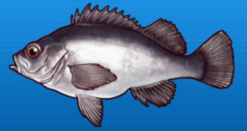File:Rockfish.png