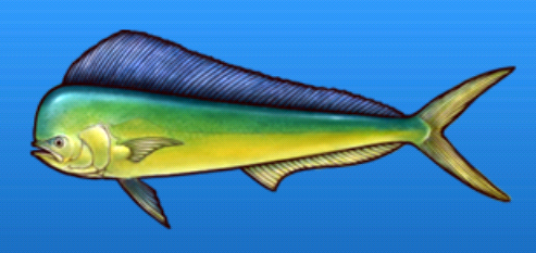 File:Dolphinfish.png