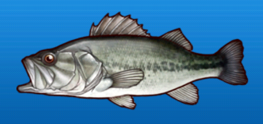 File:Bass.png