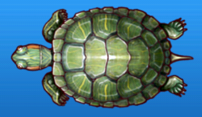 File:Red-eared slider.png