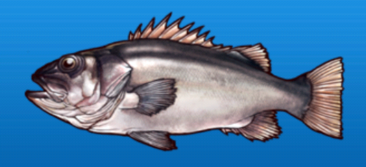 File:Fat bass.png