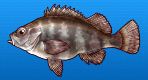 File:Black rockfish.png