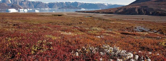 File:Greenland 2.jpg