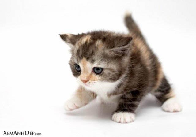 File:Cute cat102.jpg
