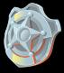 Shield icon