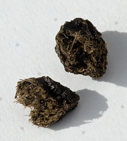 File:Rabbit Droppings Manure.jpg