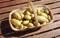 Charlotte Potato Trug