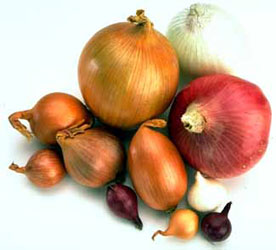 File:Onion Varieties.jpg