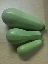 Courgette Opal Fruit