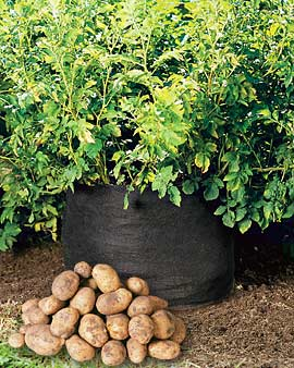 File:Potato Bag.jpg