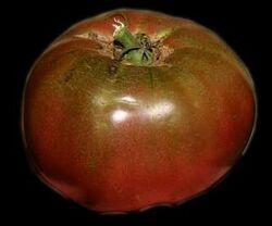 Tomato Cherokee Purple Fruit