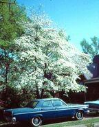 Floweringdogwood