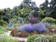 Herb Garden, Spring Blooms, Huntington Library