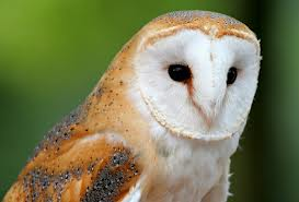 File:Owl3.png