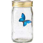Butterfly Collection-Blue Morpho