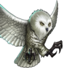 Troop Snowy Owl