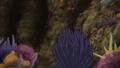 Scarlet Cobra Urchin profile.png