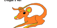Craigan's Rat
