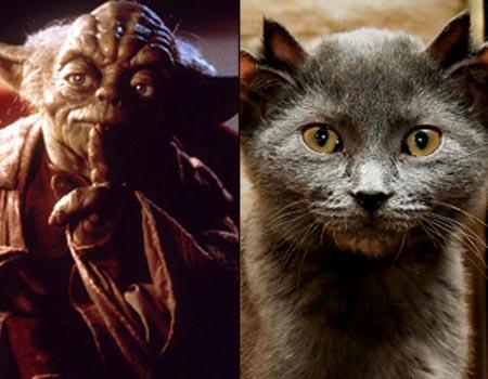 File:Yoda and Cat Showdown.jpg