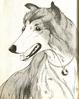 Lassie8