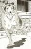 Lassie12