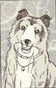 Lassie3
