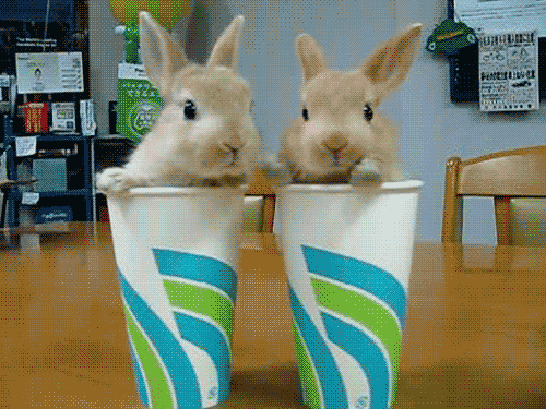 File:2 bunnies 2 cups.png