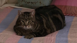 File:Lord Tubbington.png