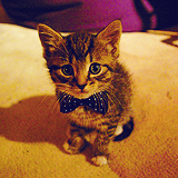 File:Kittybowties.png
