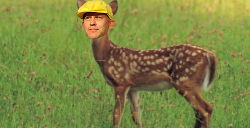 File:Deer ryan.jpg