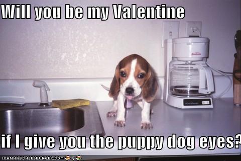 File:Puppy dog eyes.jpg