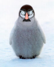 Penguin-chick-1