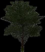 Wood (Military)
