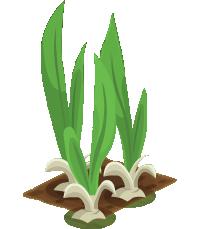 Garlic (200)