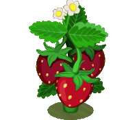 Strawberry Bush (200)