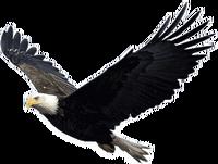 Eagle PNG1237