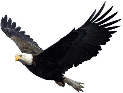 File:Eagle PNG1237.png