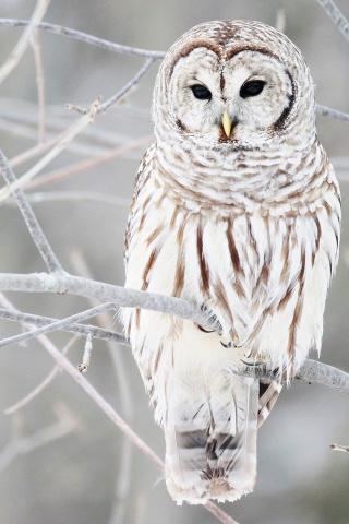 File:28951-owl.jpg